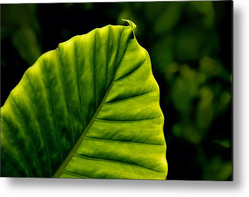 Leaf Metal Print featuring the photograph Green Leaf by Lyle Huisken