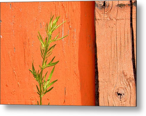 Color Metal Print featuring the photograph Green On Orange 2 by Art Ferrier