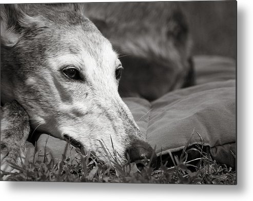 Editorial Metal Print featuring the photograph Greyful by Angela Rath