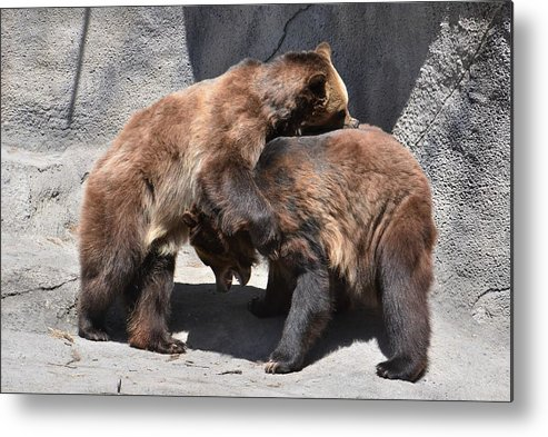 Grizzly Bear Metal Print featuring the photograph Grizzlies' Playtime 4 by Flo McKinley