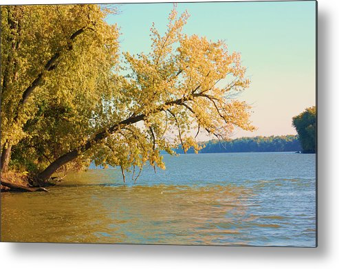 Tree Metal Print featuring the photograph Hanging Out by Jame Hayes