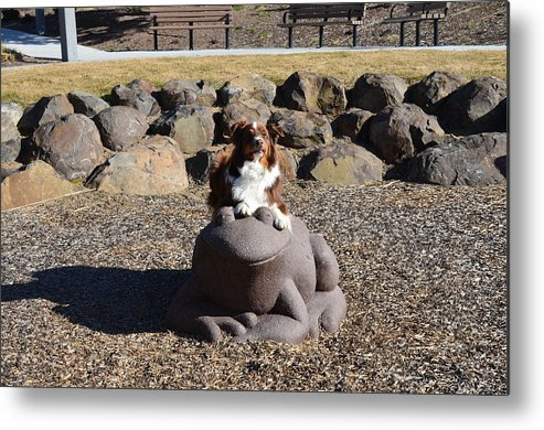 Frog Metal Print featuring the photograph Hank And The Frog by Linda Larson