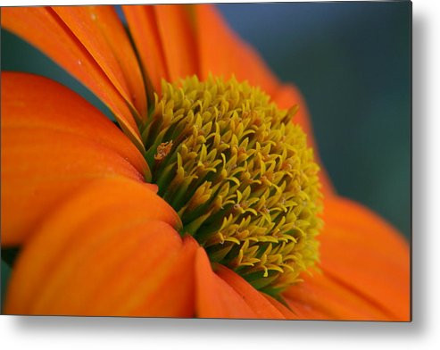 Orange Flower Metal Print featuring the photograph Happy by Linda Russell