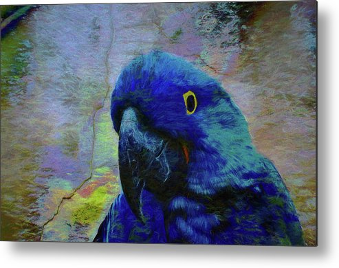 Birds Metal Print featuring the photograph He Just Cracks Me Up by Jan Amiss Photography