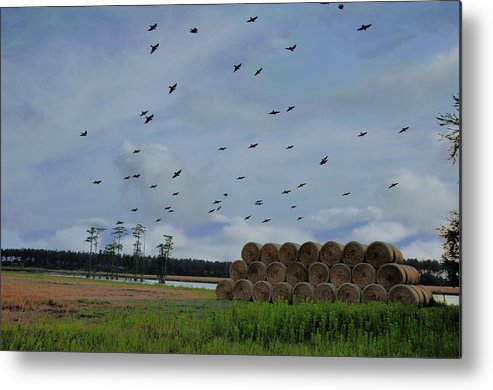 Landscapes Metal Print featuring the photograph Headed For The Pond by Jan Amiss Photography