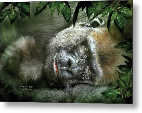 Gorilla Metal Print featuring the mixed media Heart Of A Beast by Carol Cavalaris
