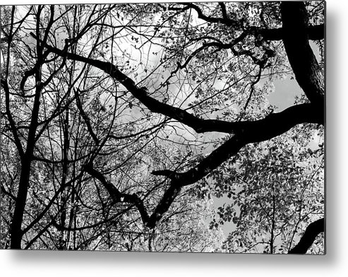 Black And White Metal Print featuring the photograph Hiking Trail Fall 2017 7 Bw by Mary Bedy