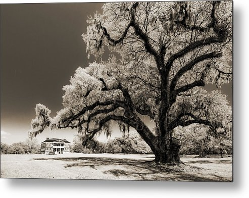 Historic Metal Print featuring the photograph Historic Drayton Hall In Charleston South Carolina Live Oak Tree by Dustin K Ryan