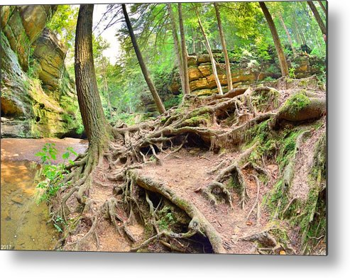 Hocking Hills Ohio Old Man's Gorge Trail Metal Print featuring the photograph Hocking Hills Ohio Old Man's Gorge Trail by Lisa Wooten