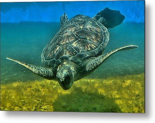 Turtle Metal Print featuring the photograph Honu by DJ Florek