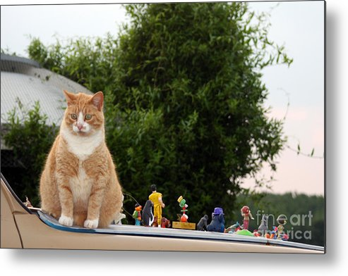 Cats Metal Print featuring the photograph Hood Ornaments by Joy Tudor