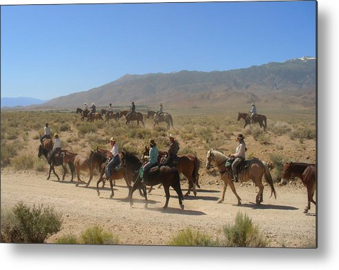 Horses Metal Print featuring the photograph Horse Drive From June Lake To Bishop California by Christine Till