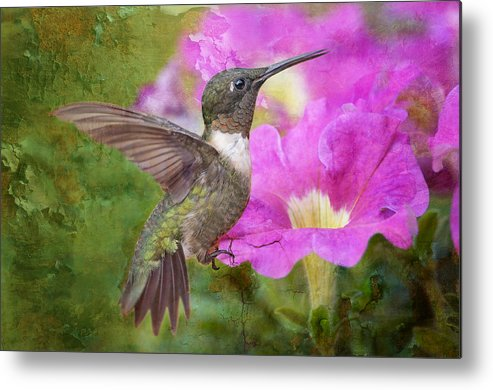 Hummingbird Metal Print featuring the photograph Hummingbird And Petunias by Bonnie Barry