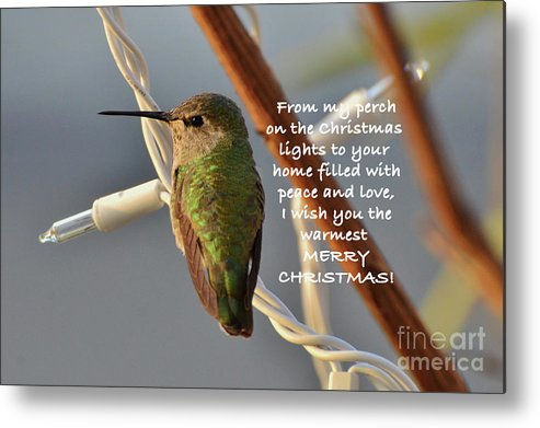 Christmas Wished Metal Print featuring the photograph Hummingbird Christmas Card by Debby Pueschel