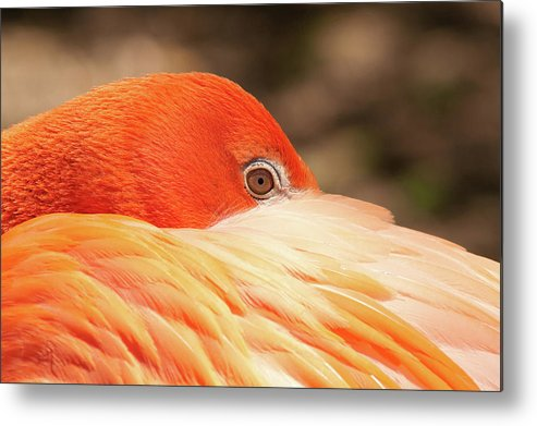 Aves Metal Print featuring the photograph I Can Still See You by Craig Hosterman
