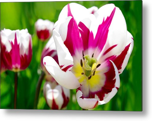 Floral Metal Print featuring the photograph I Love Spring by Debra Orlean