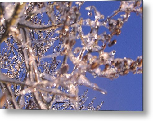 Sky Metal Print featuring the photograph Ice Branches by Tammy Bullard