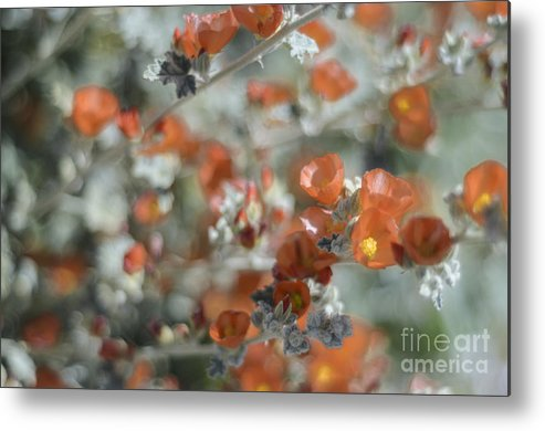 Desert Globemallow Metal Print featuring the photograph Impressionism by Tamara Becker