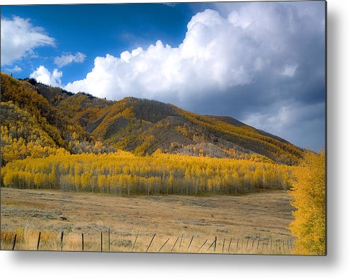 Colorado Fall Metal Print featuring the photograph In Autumn Light by Tim Reaves