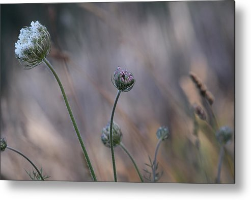 Stillness Metal Print featuring the photograph In The Stillness by Bonnie Bruno