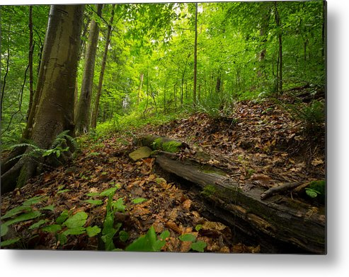 Woods Metal Print featuring the photograph In The Woods_2 by Shane Holsclaw