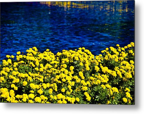 Orlando Metal Print featuring the photograph It Was All Yellow... by Sarita Rampersad