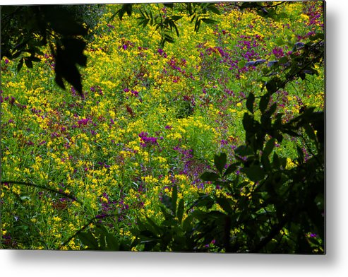 Nature Floral Wildflowers Metal Print featuring the photograph Jackson County Wildflowers by George Ferrell