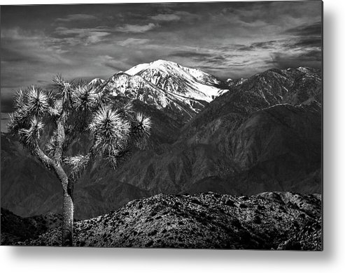 California Metal Print featuring the photograph Joshua Tree At Keys View In Black And White by Randall Nyhof