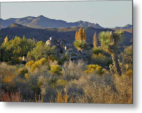 Sunset Metal Print featuring the photograph Joshua Tree National Park In California by Christine Till