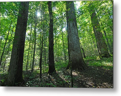 Forest Metal Print featuring the photograph Joyce Kilmer Forest by Alan Lenk