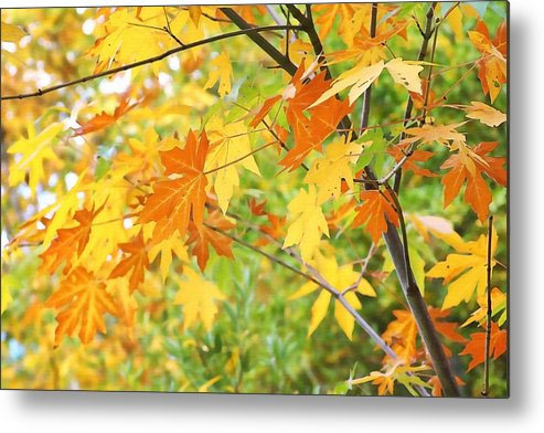 Leaves Metal Print featuring the photograph Kaleidoscope Of Color by Art Block Collections