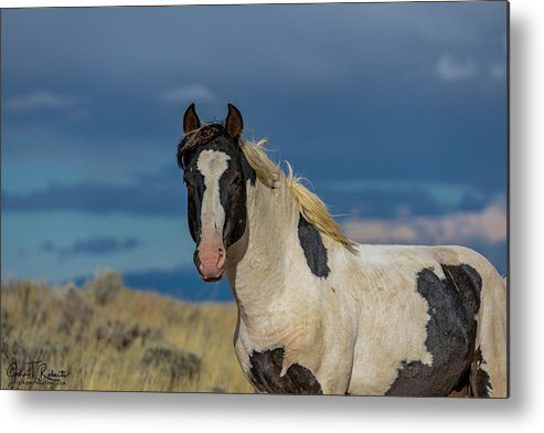 Wild Metal Print featuring the photograph Keeping Watch Over The Herd by Clicking With Nature