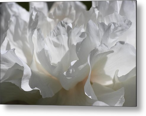 Peony Metal Print featuring the photograph King Of The Flowers by Iryna Goodall