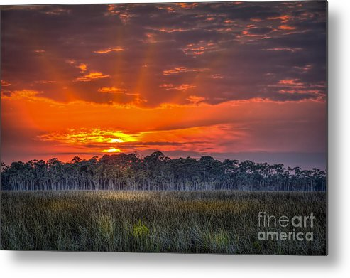 Pine Island Metal Print featuring the photograph Labor Of Love by Marvin Spates