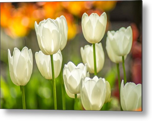 White Metal Print featuring the photograph Ladies In White by Bill Pevlor
