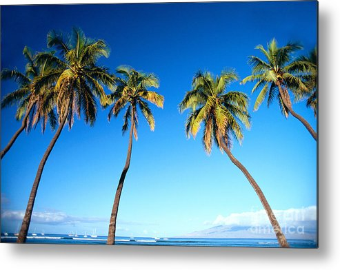 Bark Metal Print featuring the photograph Lahaina Palms by Carl Shaneff - Printscapes