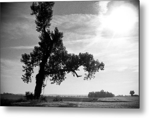 Landscape Metal Print featuring the photograph Last Tree Standing by Melissa Riggs