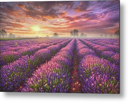 Lavender Metal Print featuring the painting Lavender Field by Phil Jaeger