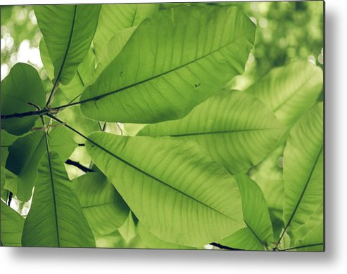 Photography Metal Print featuring the photograph Leaves by Michelle Maney