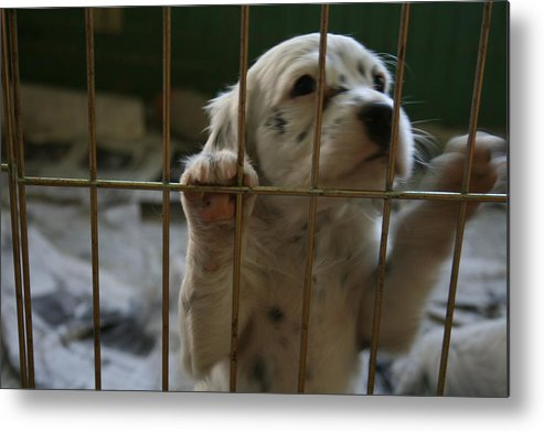 Puppy Metal Print featuring the photograph Let Me Out by Jeff Porter