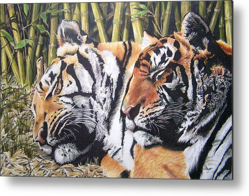 Animals Metal Print featuring the drawing Let Sleeping Tigers Lie by Susan Moyer