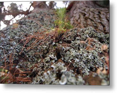 Lichen Metal Print featuring the photograph Lichen Tower by Jean Booth