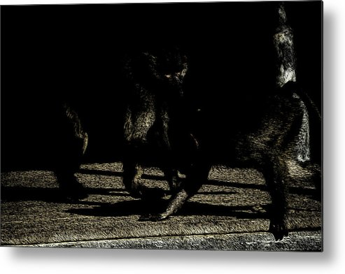 Art Metal Print featuring the photograph Life In The Shadows by Ryan Fox
