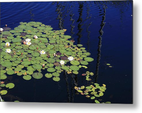 Lilypads Metal Print featuring the photograph Lily Worlds One by Alan Rutherford