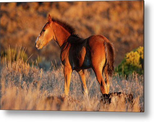 Horse Metal Print featuring the photograph Little Filly by Athena Mckinzie