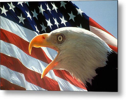 Eagle Metal Print featuring the photograph Live Free Or Die by Carl Purcell
