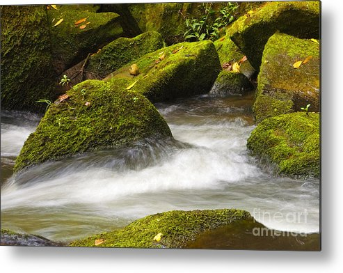 Living Metal Print featuring the photograph Living Waters by Neil Doren