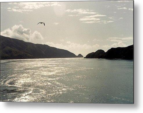 Water Bird Metal Print featuring the photograph Lone Bird Over Marlborough Sounds Nz by Adrianne Wood