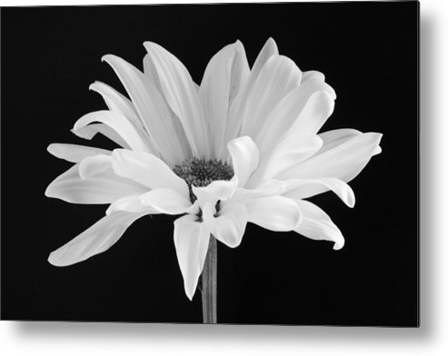 Daisy Metal Print featuring the photograph Lone Daisy by Harry H Hicklin