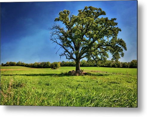 Jennifer Rondinelli Reilly Metal Print featuring the photograph Lone Oak Tree In Wisconsin Field by Jennifer Rondinelli Reilly - Fine Art Photography